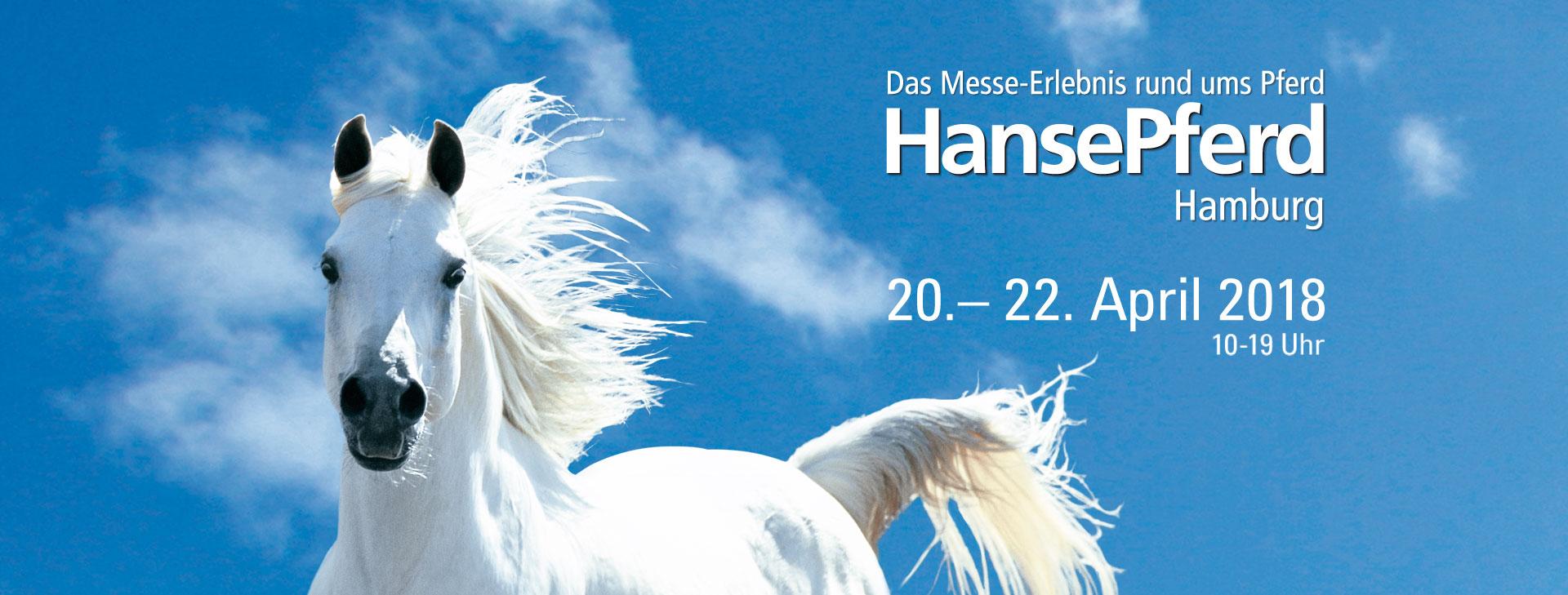 Bildergebnis für Hansepferd